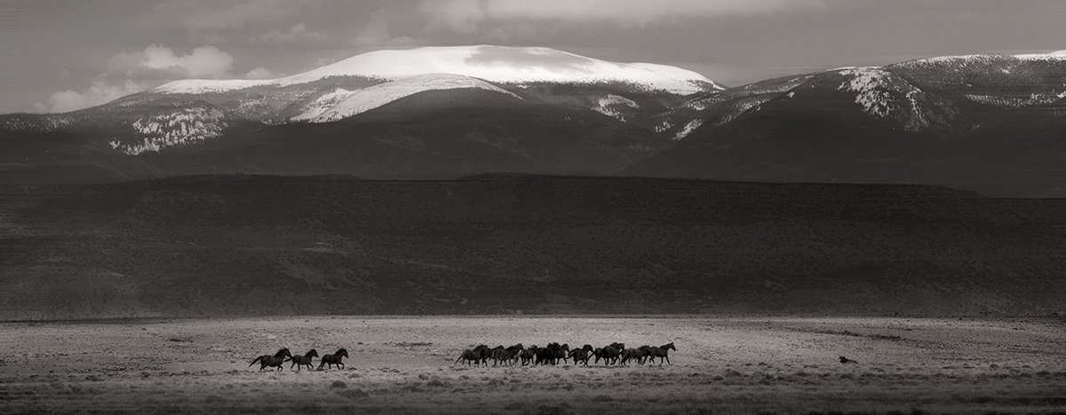 Photography tour/workshop Wild Horses San Luis Valley southern Colorado