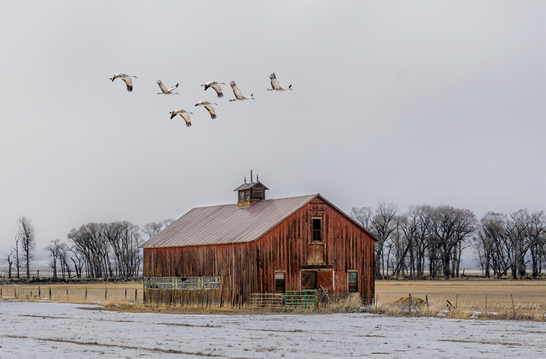 Red Barn, Green Gate, Sandhill Cranes