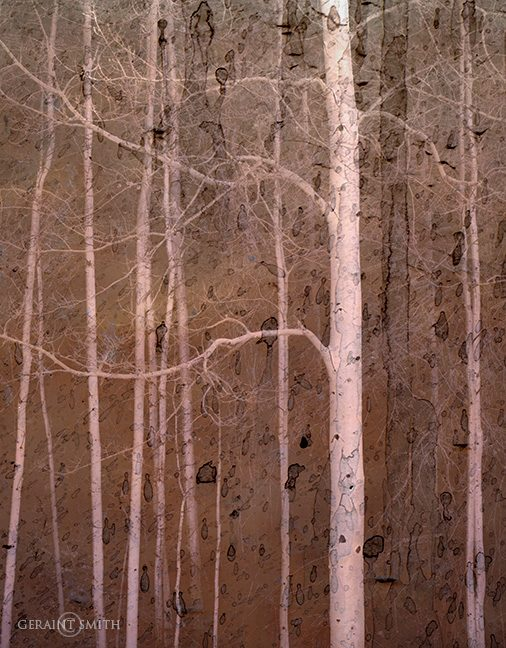 Aspens on the High Road To Taos