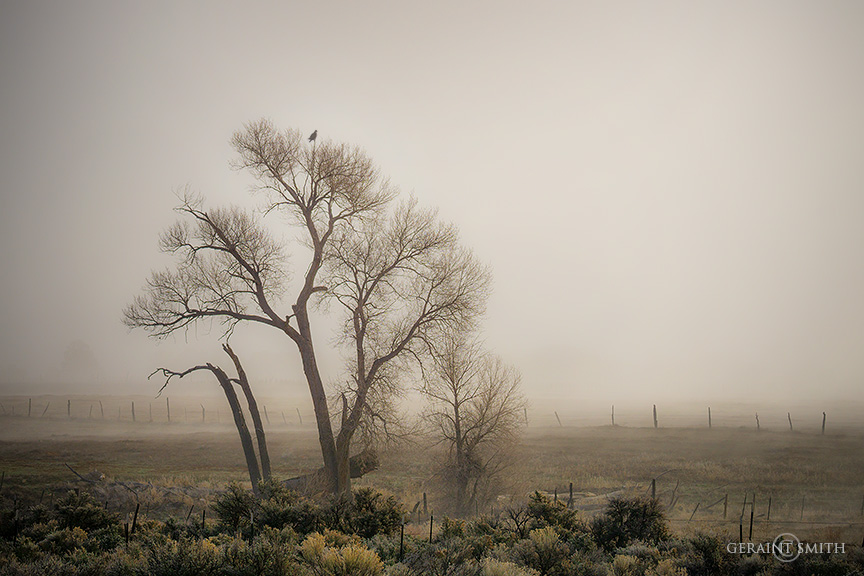 Hawk Tree, Arroyo Hondo, NM