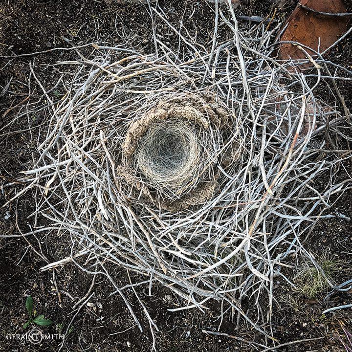 Magpie nest, San Cristobal