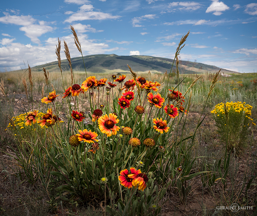 Blanket Flowers, San Antonio Mountain