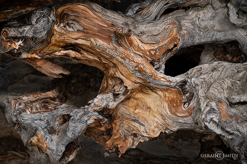 Root Burl, In The Woods