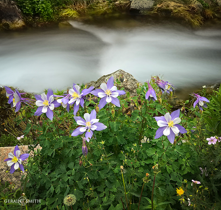 Rio Hondo, Columbine, Twining, New Mexico