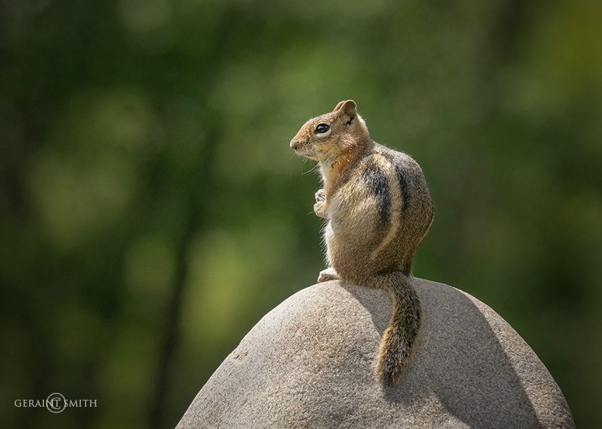 Chipmunk, Rock Meditation
