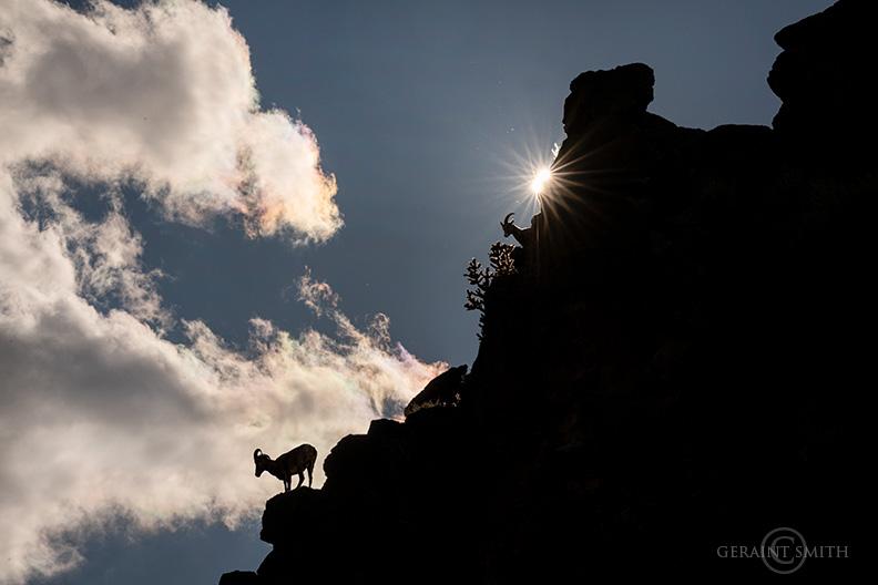 Bighorn Sheep, Orilla Verde Recreation Area