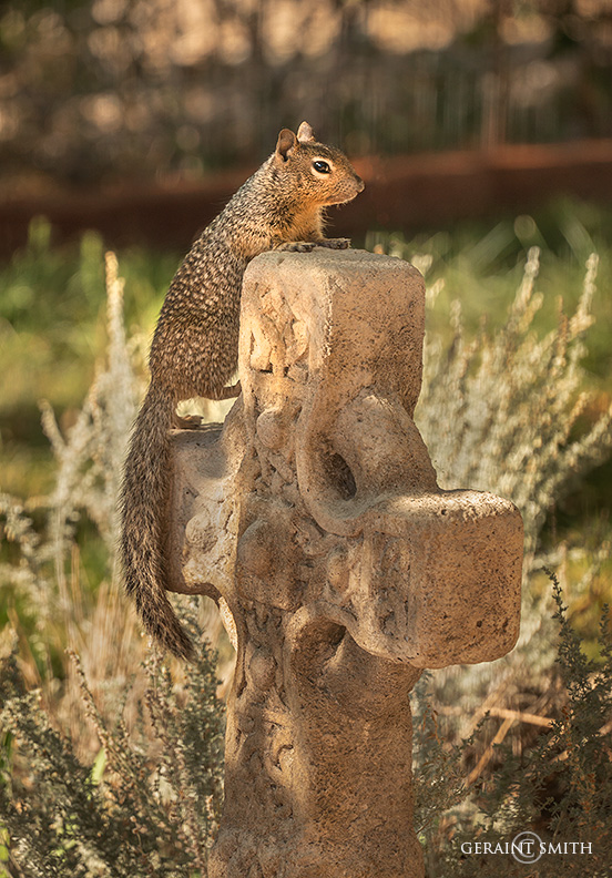 Cross Squirrel, San Cristobal, NM