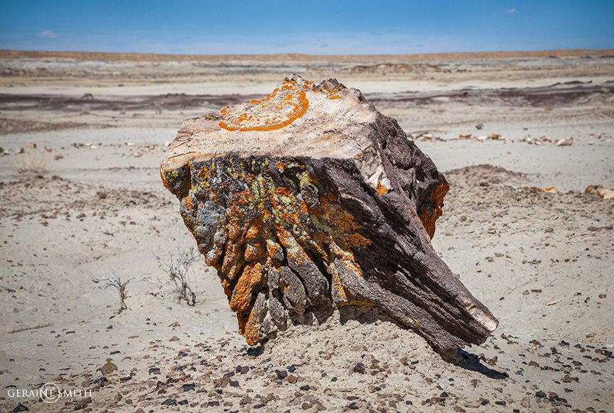 Ah Shi Sle Pah, Petrified Wood Stump