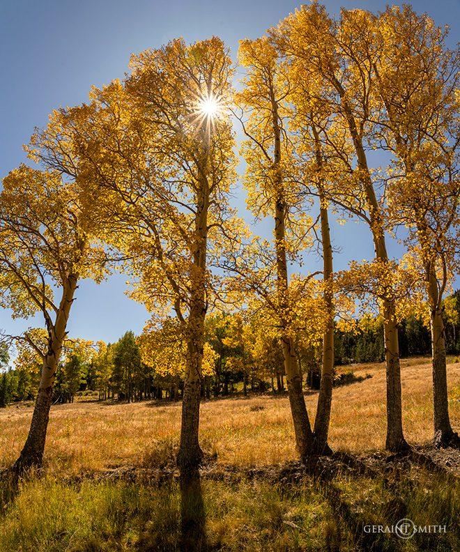 Aspen Light, Valle Vidal, NM