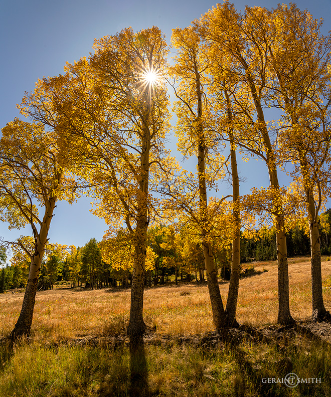 Aspen Light, Valle Vidal, NM