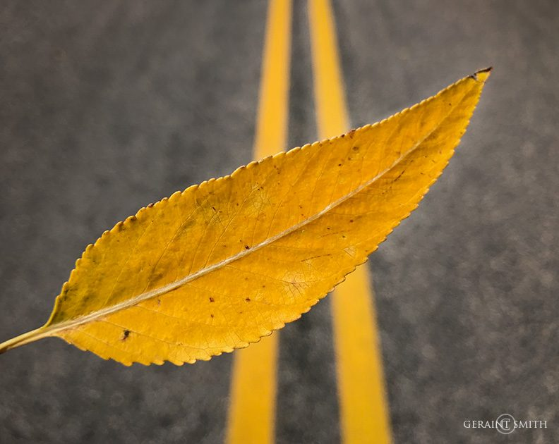 Leaf, fall color, Highway 38, northern New Mexico.