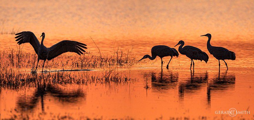 sandhill_cranes_bosque_del_apache_sunset-2209918