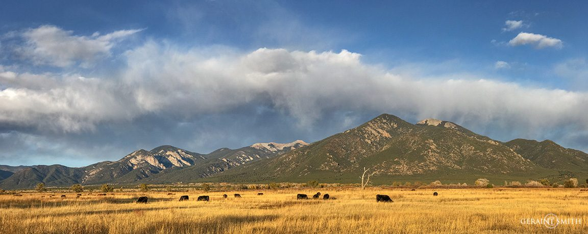 Taos Mountain, Early Evening Light In The Meadow
