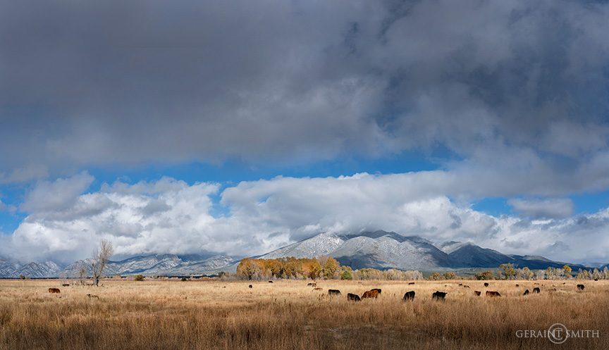 taos_mountain_meadow_cattle_a7r_4376_4378-8984655