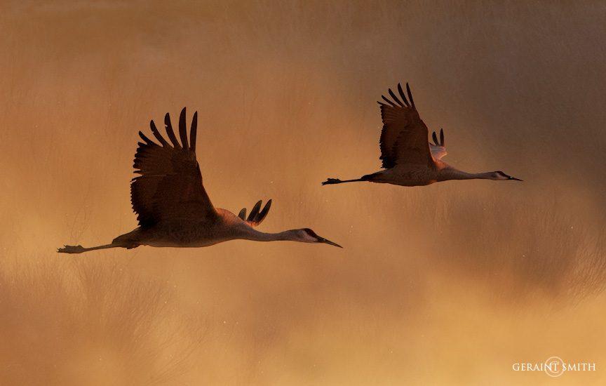 bosque_del_apache_cranes_9613-2744206