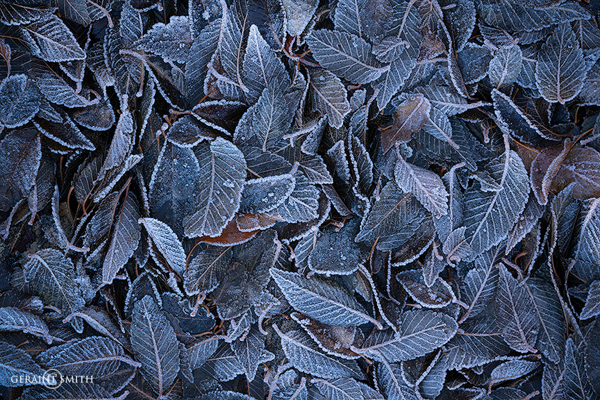 Cold and frosty morning, leaves in the driveway