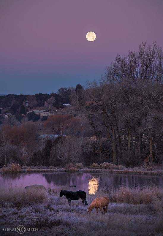Arroyo Hondo Pond, Horses. Moon Set
