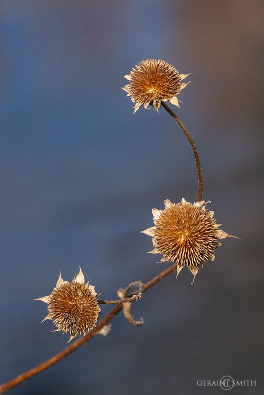 Three's Company, Lakeside, Sunflower Pods