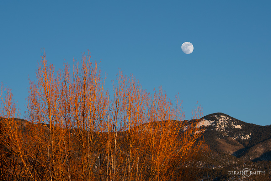 Dennis's Tree, Moon Rise, San Cristobal, NM