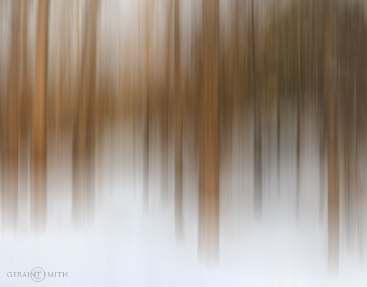 Taos Canyon, woods, snow, trees