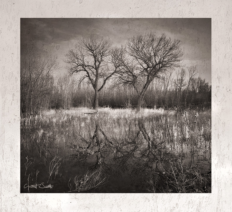 Marsh trees, Bosque del Apache, New Mexico.