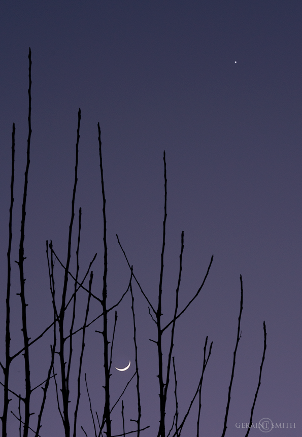Apple Tree, Crescent Moon, Venus
