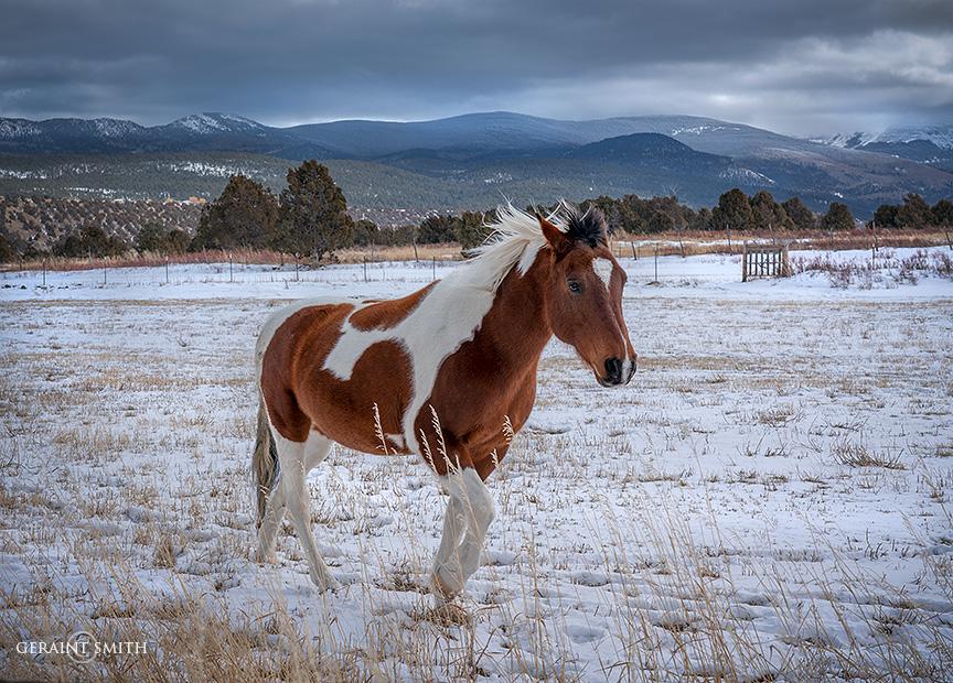 Pinto pony, Llano De San Juan, New Mexico.