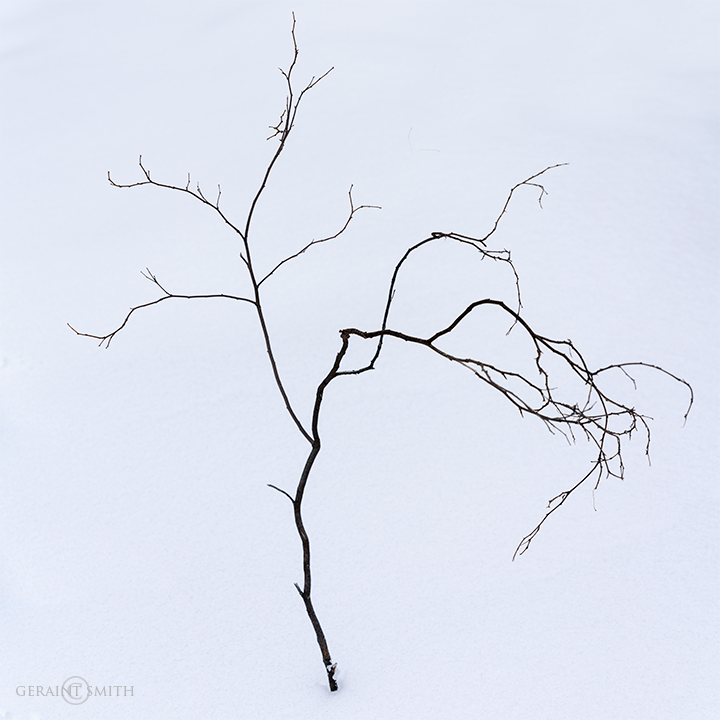 Minimalism, In The Winter Woods Today