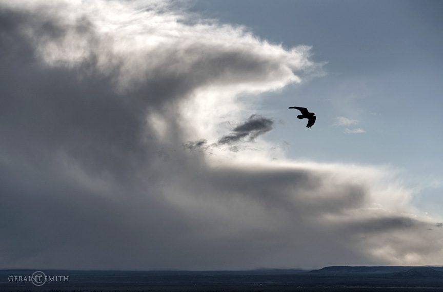 Raven, Approaching Storm, Taos Plateau