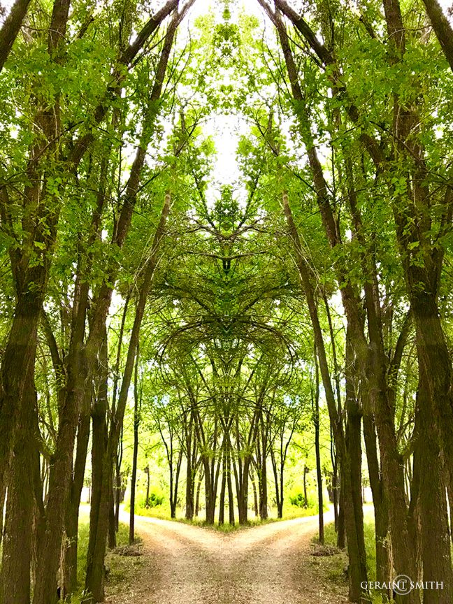 willow_avenue_mirrored_0286-6020292