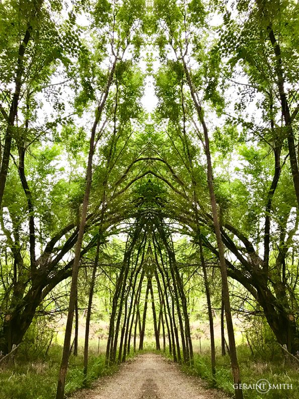 willow_avenue_mirrored_0287-3273457