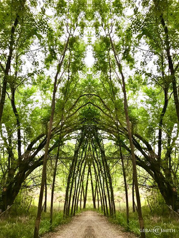 Avenue, trees, mirrored, Ranchos De Taos.