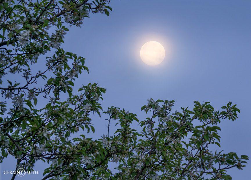 blossom_moonrise_san_cristobal_a7r_4513-5027075