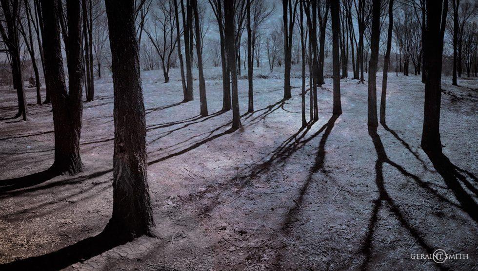 night_walk_in_the_park-2140824