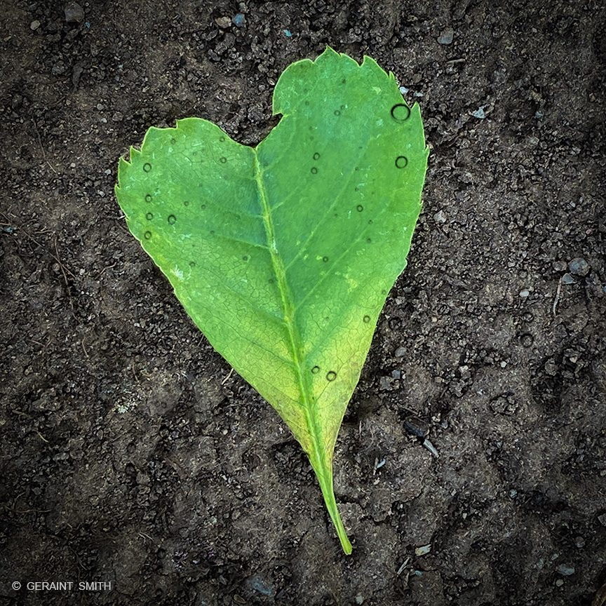 ash_tree_heart_leaf-3108331