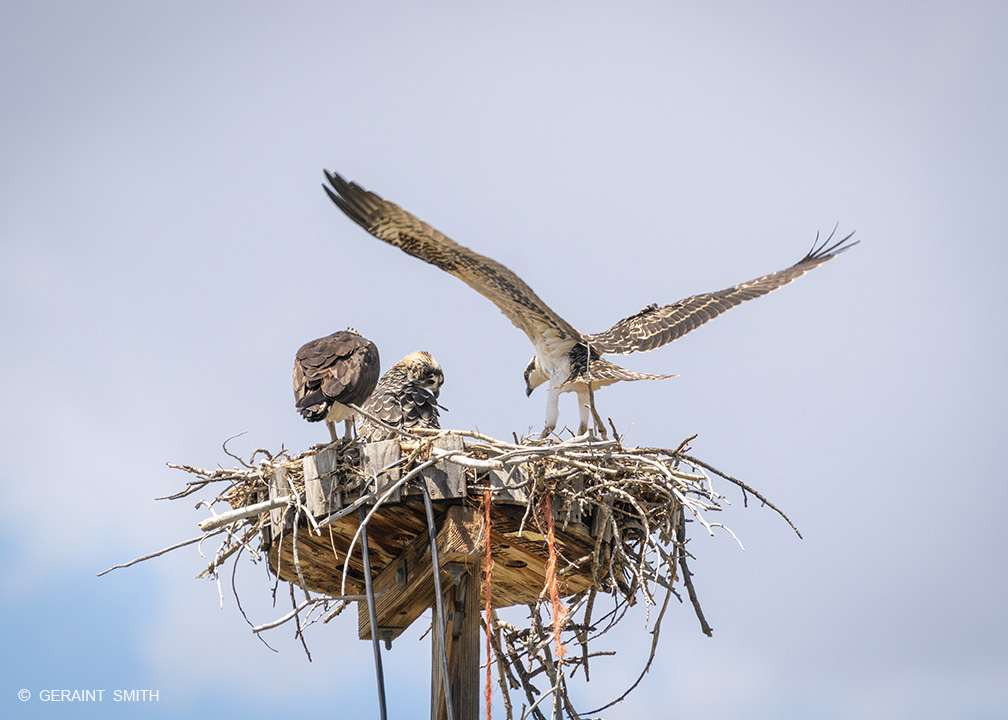 Osprey, first flight, Chama, New Mexico.