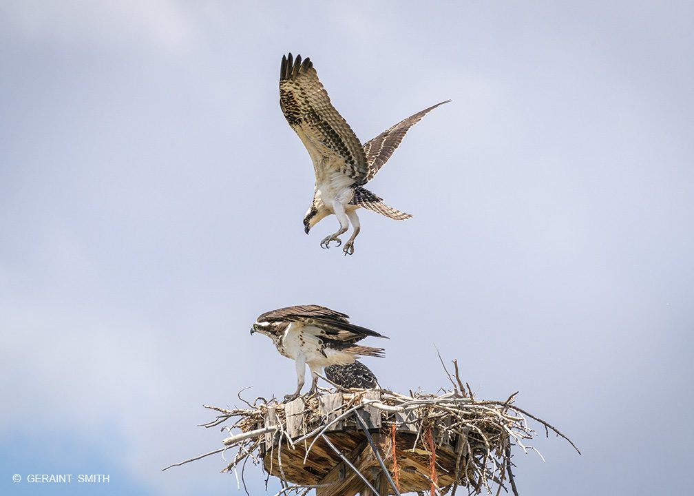 Osprey, first flight, Chama, New Mexico.