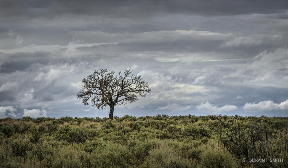 Lone Tree, Wild Rivers, Rio Grande Del Norte