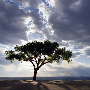 Trees lonetree1 1000