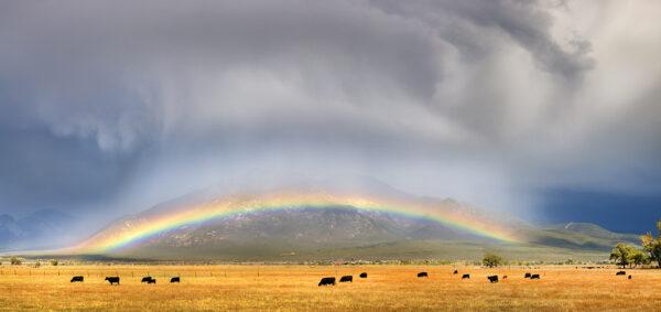 el prado rainbow 0668 74