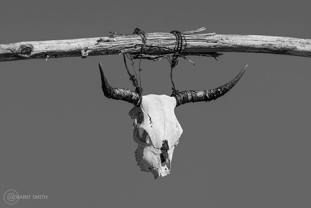 Ranch gate with steer skull, Galisteo, New Mexico.