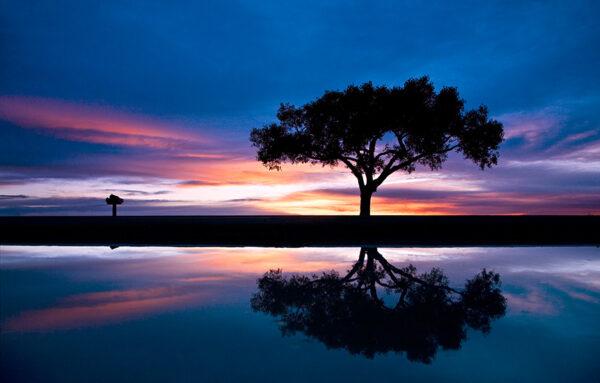 lone tree 0234