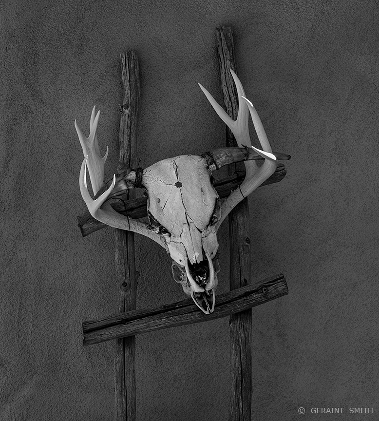Steer on a Deer skulls, Truchas