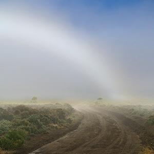 road through the fog