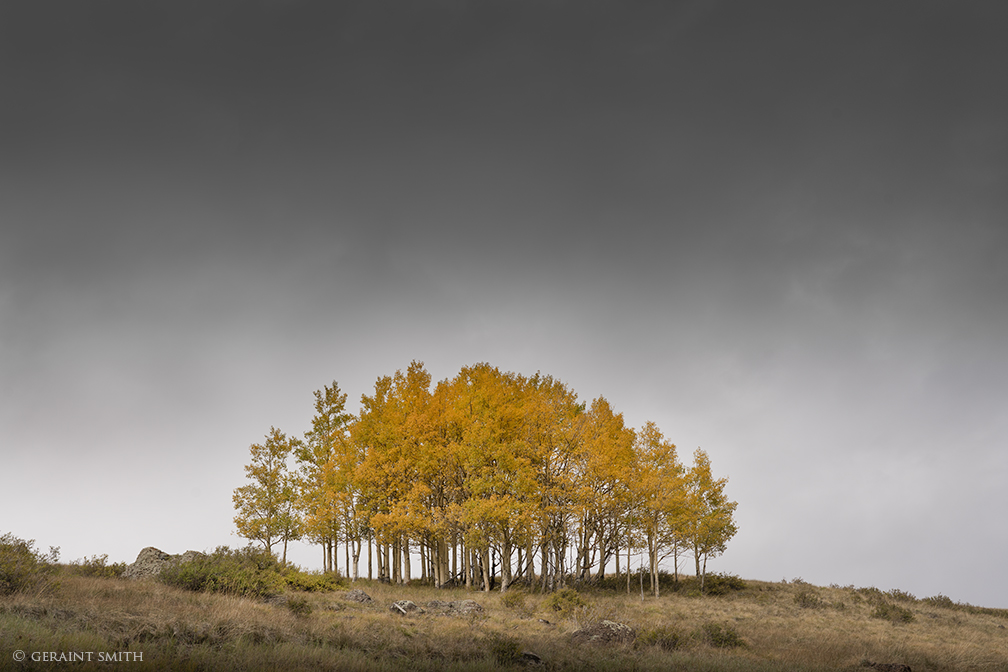 Aspen Grove, Clouds, Highway 17, Cumbres Pass, Colorado