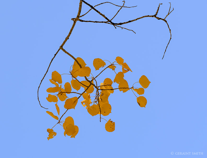 Blue Sky, Last Leaves, Hopewell Lake