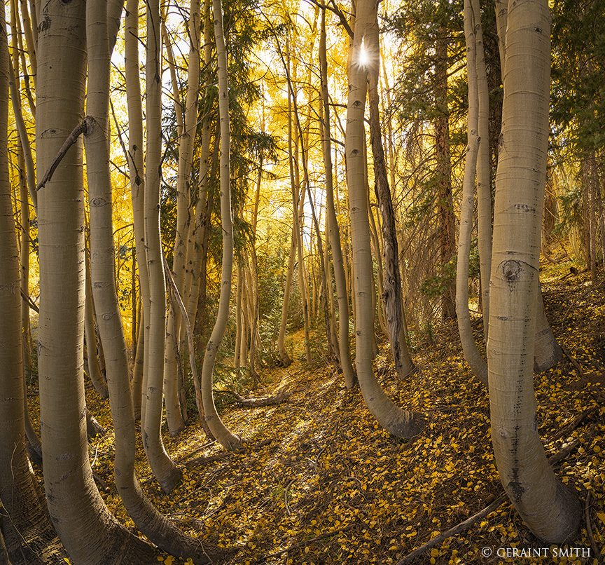Aspen Woods, Southern Colorado