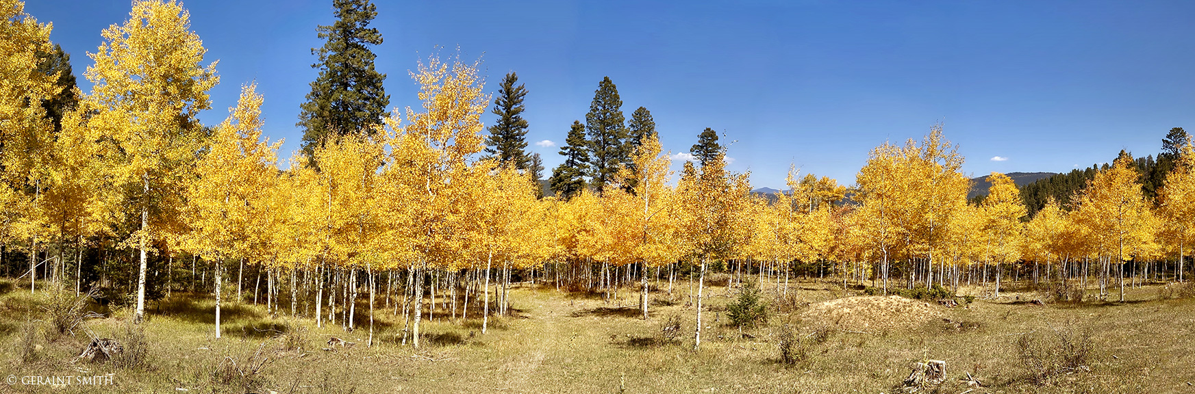 Carson National Forest, FR 437 Garcia Park, New Mexico