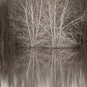 White Tree And Willows, A Riparian Habitat