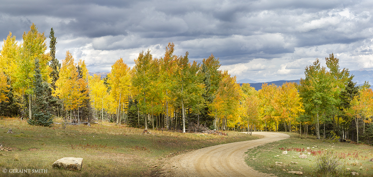 Aspen road, in the mountains of northern New Mexico
